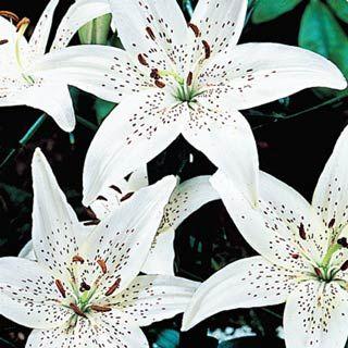 Flower Garden Ideas In Michigan 21 best front yard ideas images on pinterest | front yards, yard