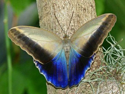 Butterflies And Moths 17