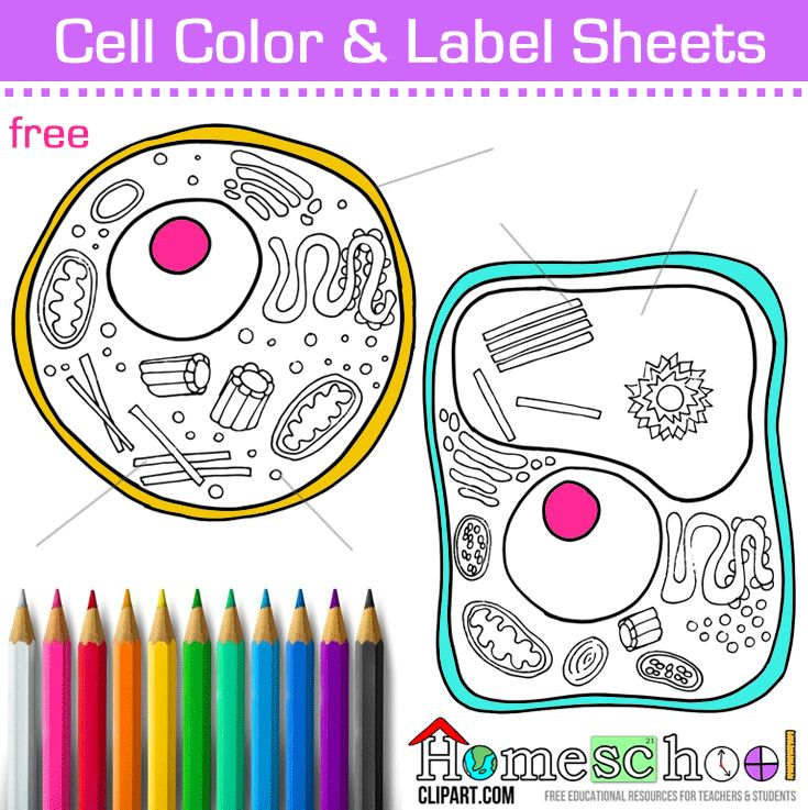 Free Cell Coloring Page. Animal & Plant Cell, Color and Label