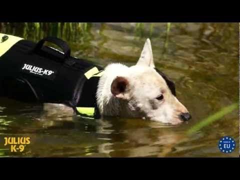 Hundeweste für Training und Rehabilitation im Wasser, Schwimmweste