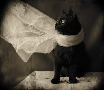 Pretty black catFashion, Kitty Cat, Black Kitty, Zsa Zsa Bellagio, Black Cats, White, Photos Shoots, Scarves, Cat Photos