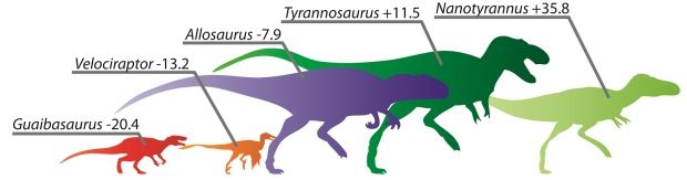 Carnivorous dinosaurs evolved for speed, U of A researcher finds:  Limb length analysis used to determine the 'cheetah' of dinosaurs  (CBC News 27 January 2016)