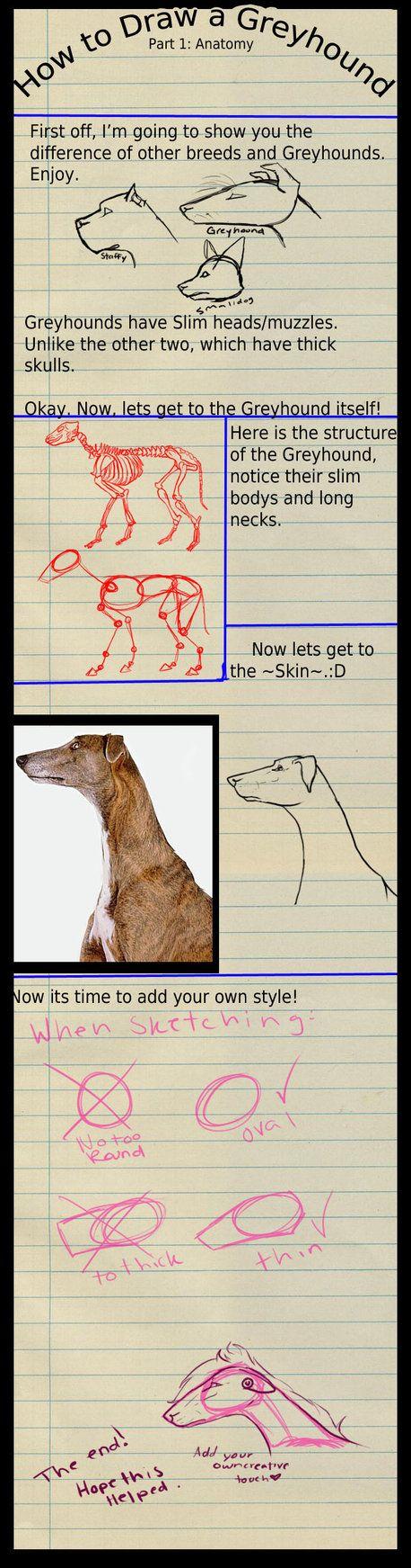 How To Draw A Greyhound