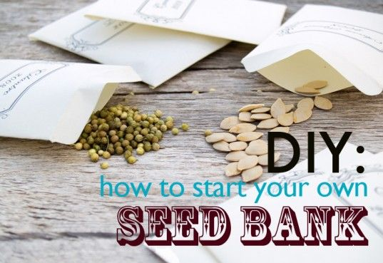 As food prices continue to rise and the very real issue of GMO contamination becomes more apparent, many people are realizing how important it is to be self-sufficient. Start your own seed bank with friends and neighbors! Here are some tips to get you started!