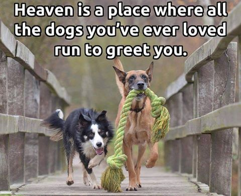 Heaven is a place where all the dogs you've ever loved run to greet you