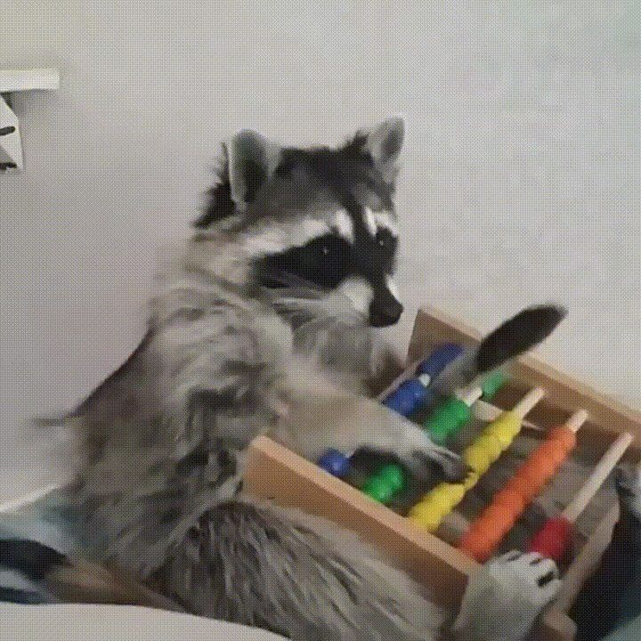 Ignore Political Posts. Upvote Abacus Raccoon! - GIF on Imgur