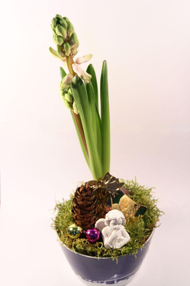 Jacinthe de Noël - Jacinthe de Noël - Jacinthe de Noël - On trouve facilement des jacinthes à partir de 1,50 euros. Ensuite, il suffit d'avoir un gros bol à céréales, un peu de mousse des bois ou du jardin, quelques pommes de pin et des petites décorations comme des mini-boules de Noël, des petits anges ou des elfes. On les trouvent généralement au fond du carton à décoration ou sur les étagères à bibelots. C'est simple et amusant, surtout avec des enfants, de préparer ses jacinthes de Noël…
