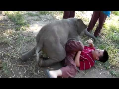 Baby elephant hug, what I wouldn't give to have one of those! <3