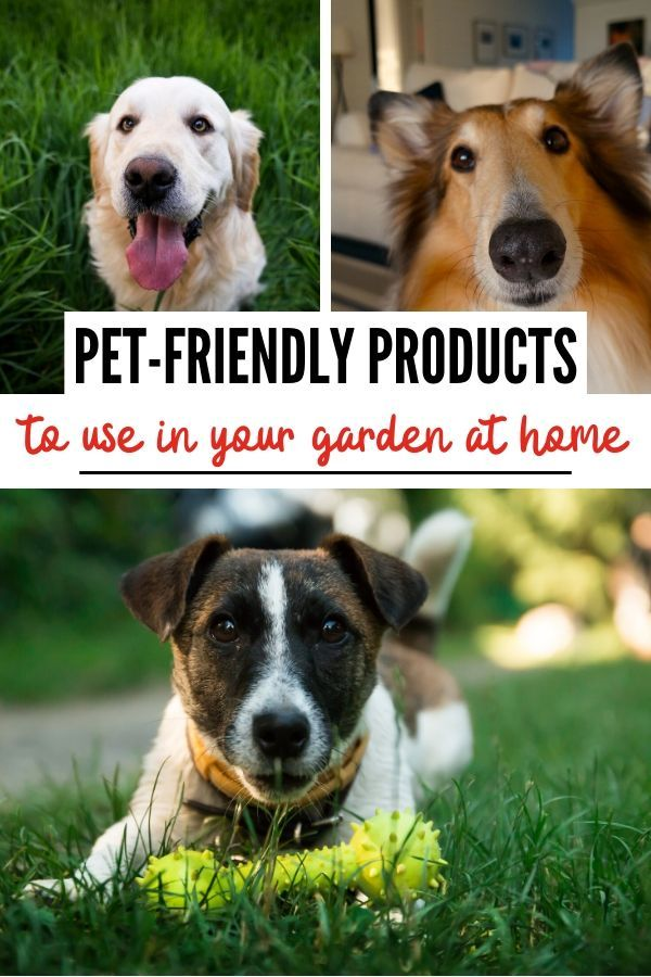 Pet Friendly Gardening Products With Images Natural Pet Care