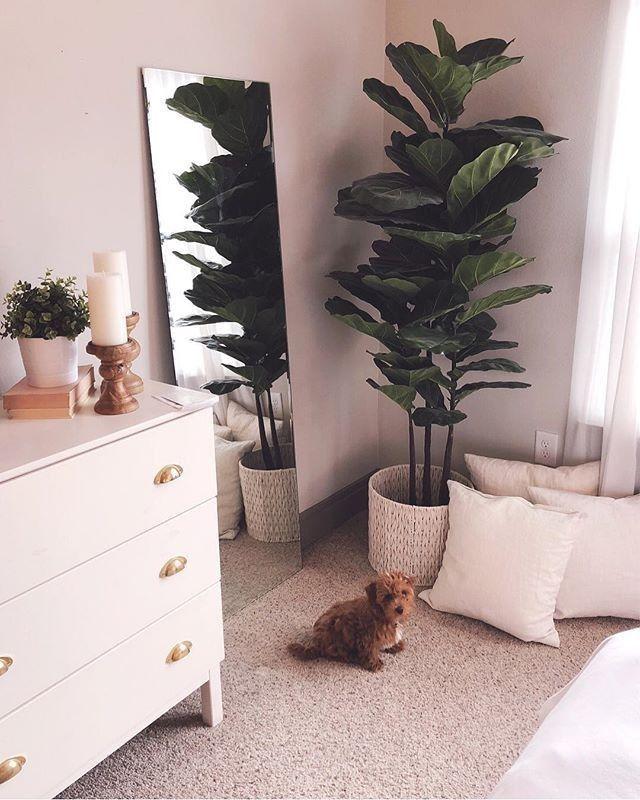 fiddle leaf fig and simple decor the humble abode room decor rh pinterest com