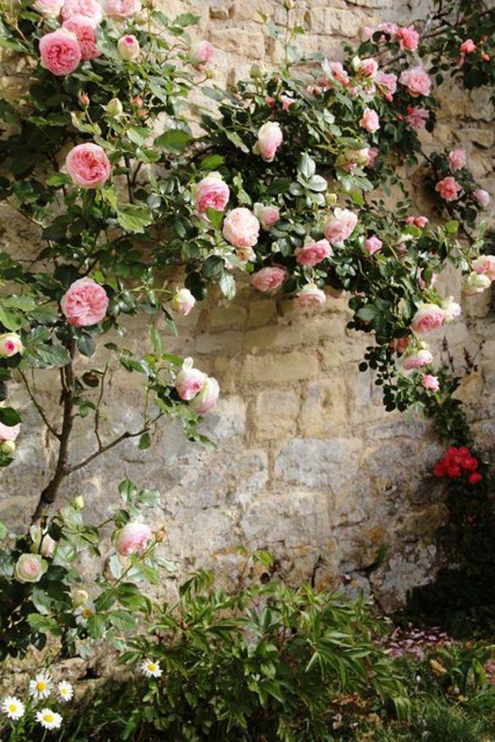 plantes grimpantes pour le jardin, roses muraux grimpantes