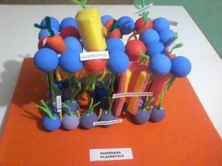 Resultado de imagen para maquete de membrana plasmatica