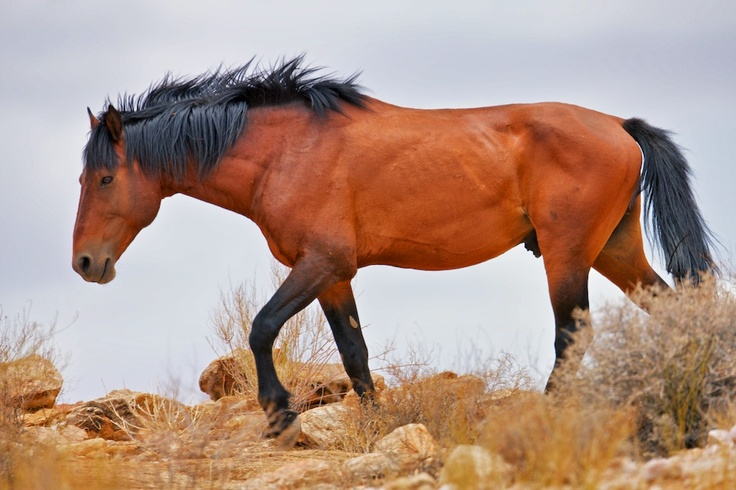 A horse that mysteriously appeared by the roadside in the wild mountain pass outside Riemvasmaak, Northern Cape.    - Nightjar Travel Blogs