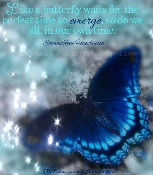Spiritual Butterfly Quotes: 11 Best Butterfly Quotes For #Weddings Images On Pinterest