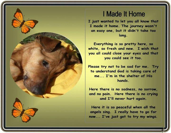 Prayer For My Pet St Francis