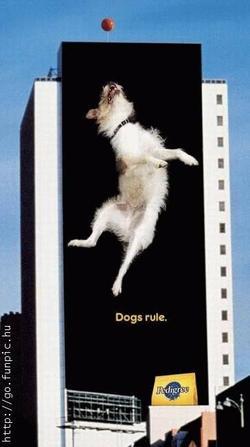 """You don't have to stay """"inside the lines"""" when it comes to billboard design, as this Pedigree outdoor ad illustrates."""