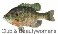 Photo of Recipes for Bluegill, Crappie, Lake Perch, Whitefish, Northern Pike, Walleye and…