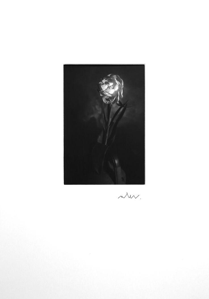 In vendita su Livin'art la n. 1 di 10  Tulipano doppio  Fotografia realizzata con Banco Ottico  Cm 16x9,5 montata su passepartout professionale cm 50x35  Tecnica di stampa: lastra a contatto su carta baritata ILFORD - Tiratura 10