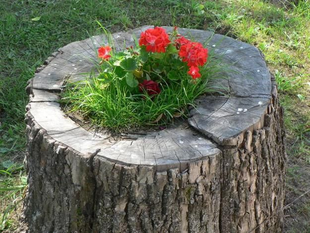 how to get rid of a tree stump naturally