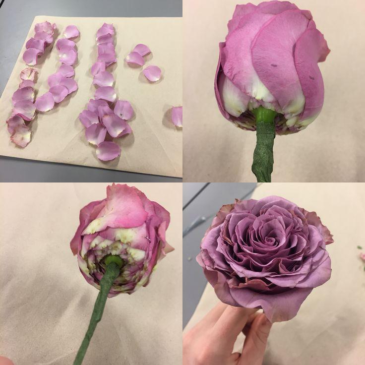 Glamelia rose