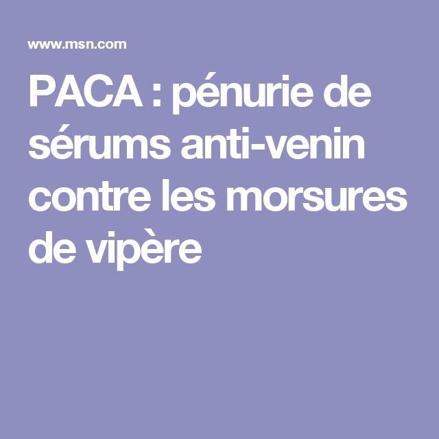PACA : pénurie de sérums anti-venin contre les morsures de vipère