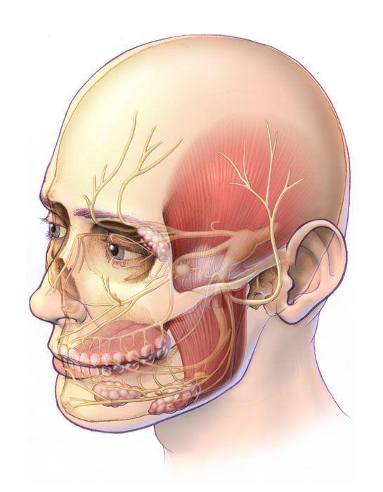 Trigeminal Nerves - Trigeminal Neuralgia