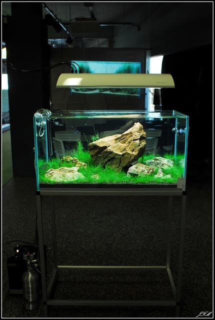 30 best aquarium decoration ideas images on pinterest for Aquarium decoration set