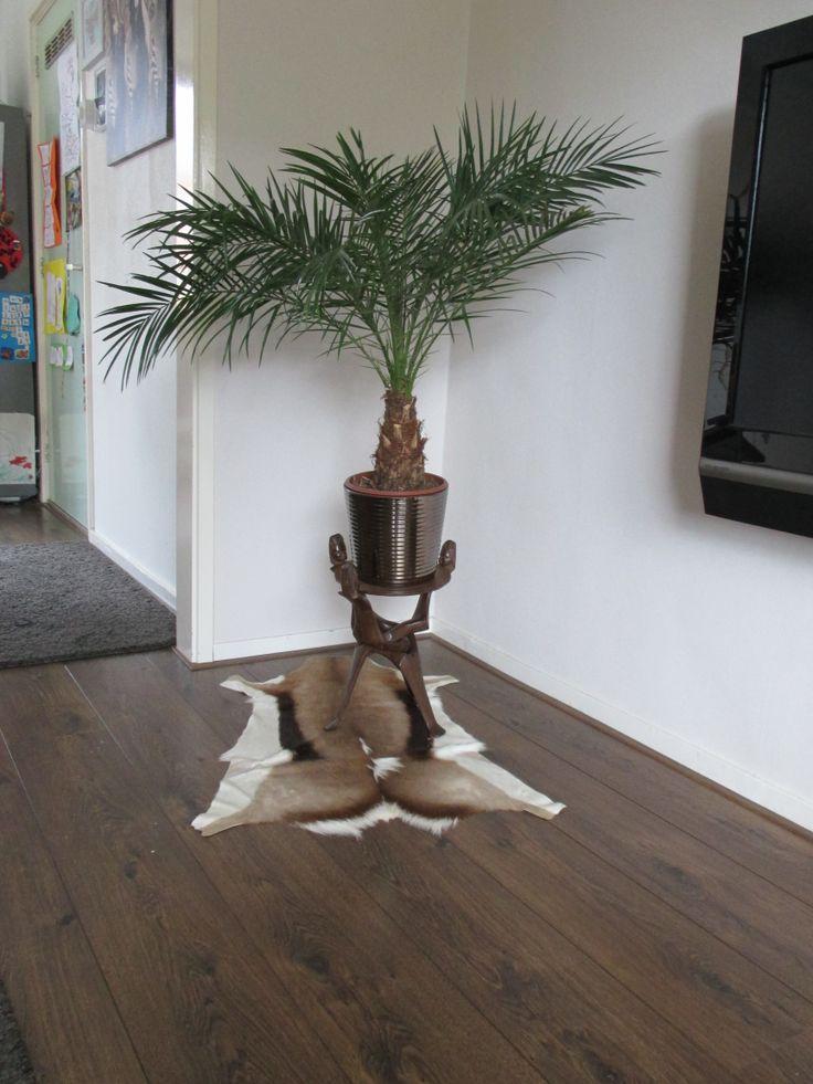Interview week 28. Like Zie je kamerplant op facebook voor meer info over de plant en hoe ze hem verzorgt.