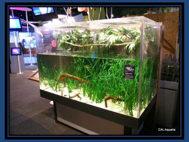 ... Aquarium on Pinterest Malawi cichlids, Cichlids and Aquarium shop