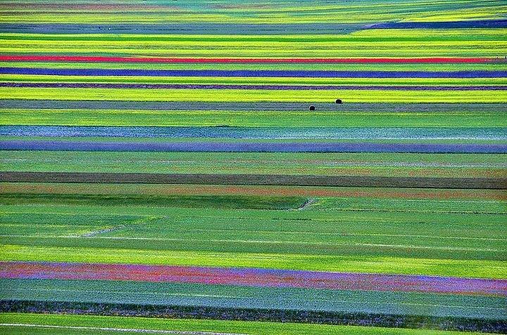 Fioritura delle lenticchie  Lentils in Flower  Castelluccio di Norcia (PG)   Hub09 - Social Design