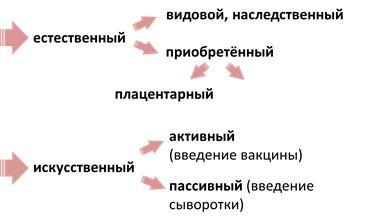 Иммунитет. Иммунная система человека