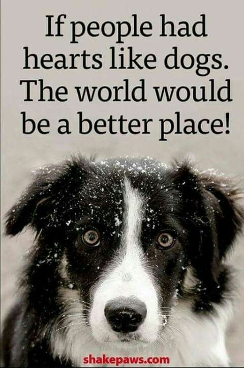 894 best images about Dog Dayz on Pinterest | German ...