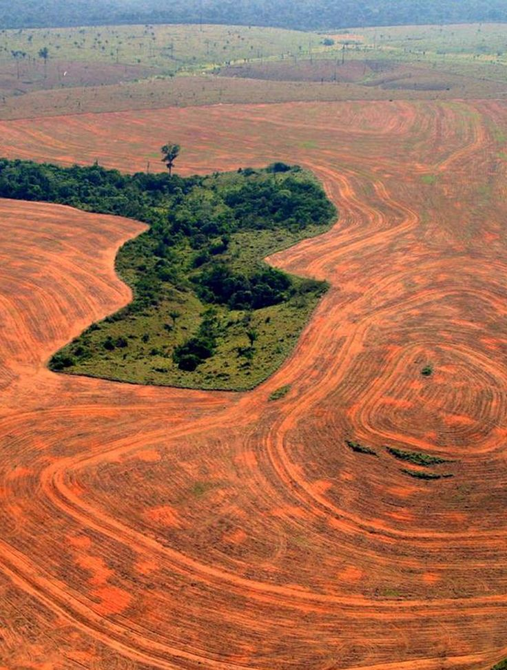 deforestation and pollution of the amazon rainforest environmental sciences essay The deforestation of the amazon rainforest is a  topic: pollution – environmental  to the problem of deforestation in my essay i am going to.