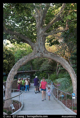 Archway formed by a tree, Gilroy Gardens. California, USA