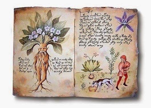МАГИЯ РАСТЕНИЙ Манжетка, чертополох, крапива, чернобыльник, папоротник, ятрышник, рябина, герань, алоэ, зверобой, вереск, береза, можжевельник, полынь, лук, чеснок, осина - растения, имеющие магическую силу, которые можно использовать для собственной защиты и защиты дома, растения-обереги.  Девясил, маргаритка, гвоздика, фиалка, сирень, роза, вербена, ятрышник, шиповник, герань белая, розмарин - любовные заклинания и Талисманы-любви.  Лен (семя), фиалка (корень), вереск (дым), сельдерей…