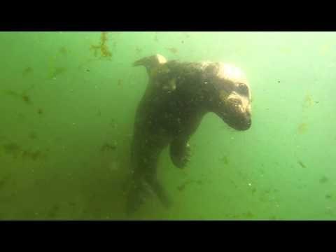 Great White Shark Menu   Episode 1