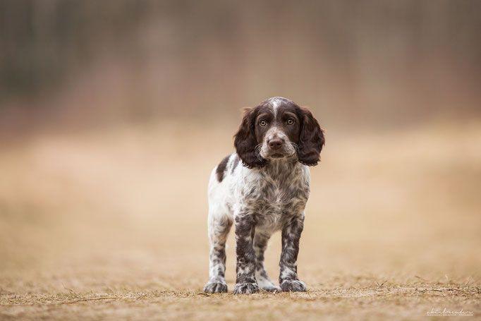 Hundefotografie Tipps Tricks Hundefotografie Tierfotografie Hunde