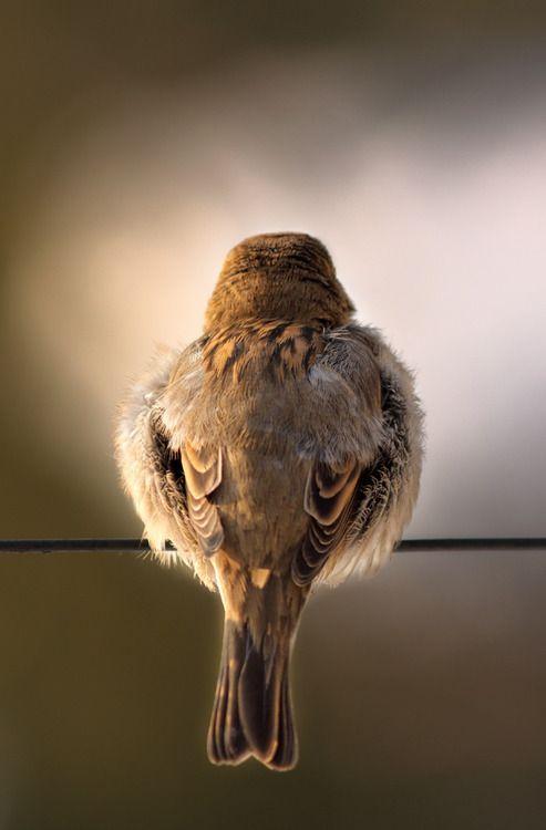 雀、後ろ姿が美しい。