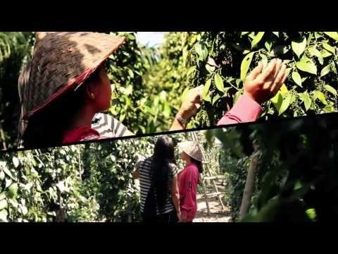 Film Panen Lada Bangka Belitung (Cerita Gawe Mereka)