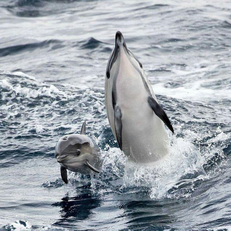www.pegasebuzz.com | Dauphins, dolphins.