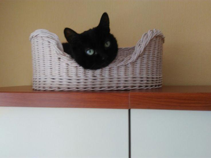 Корзинка для Басюні з Басюнєю. Я люблю тебе, сонечко. Basket for my cat Basiunia / pet furniture