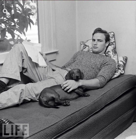 Dachshunds in Pop Culture: Marlon Brando. dog. vintage. old hollywood. famous pets. looks like the source links are broken so this is the end of the road.