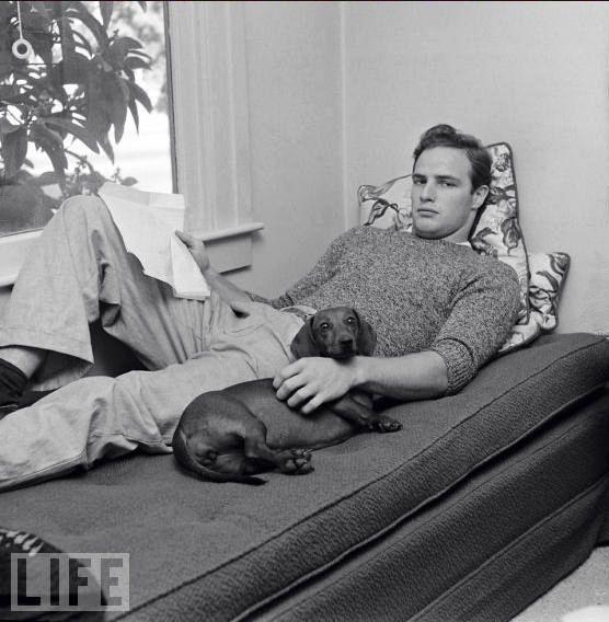 Revista Life foto de Marlon Brando con su perro salchicha