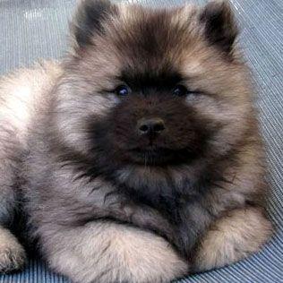 gorgeus puppy