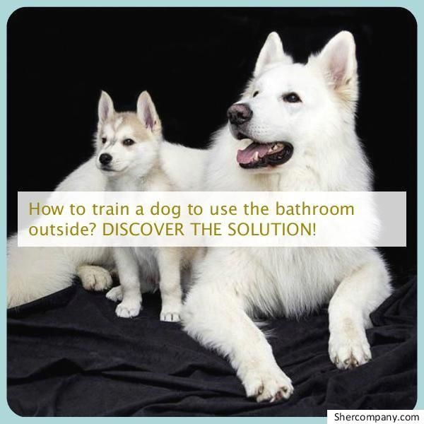 Exuberant Transferred Command For Dog Training Shop Low Prices