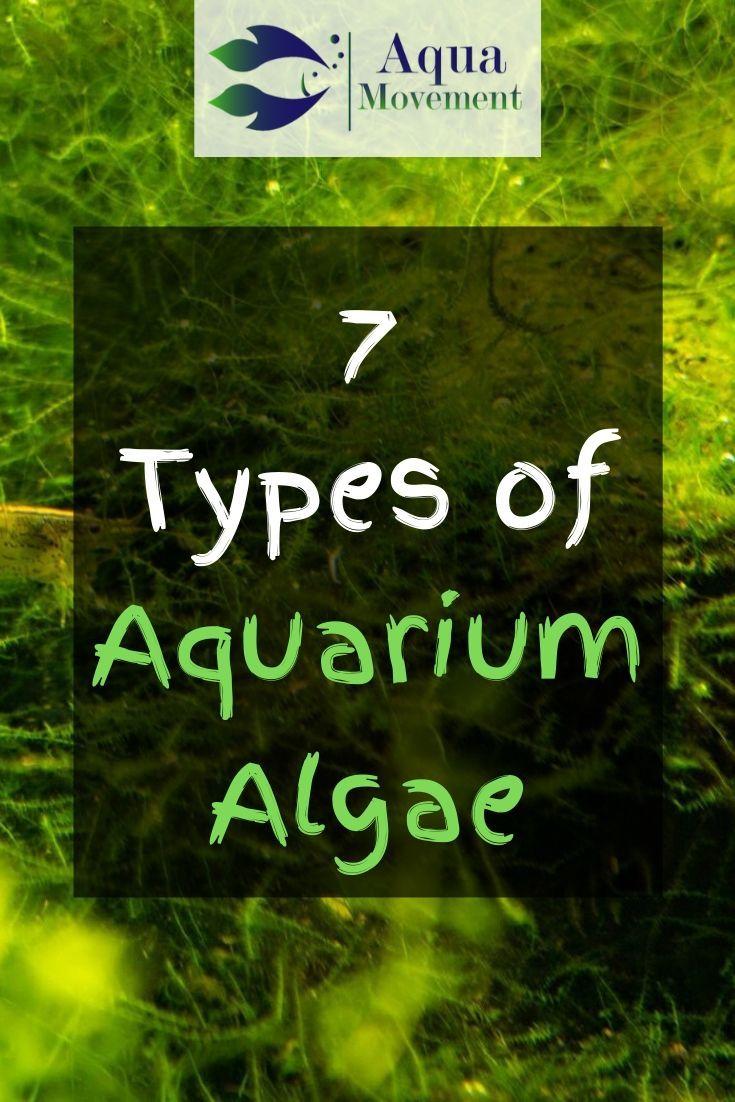 7 Aquarium Algae Types Freshwater And Saltwater Aqua Movement Aquarium Algae Aquarium Freshwater Aquarium Plants