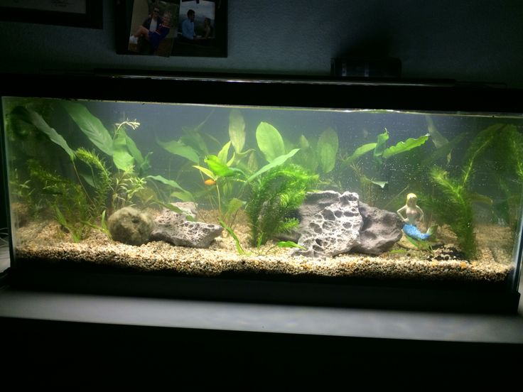 17 best ideas about 20 gallon long aquarium on pinterest for Yellow fish tank water