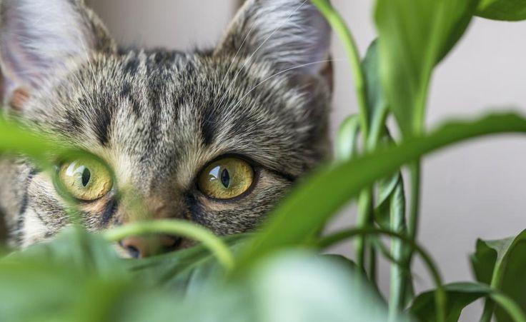 die besten 25 pflanzen gegen katzen ideen auf pinterest. Black Bedroom Furniture Sets. Home Design Ideas