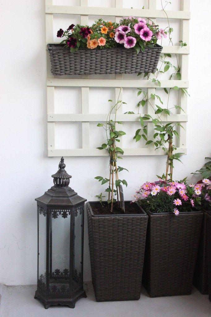 trellis for clematis climber at balcony klätterväxter balkong spalje spaljé klematis vildvin