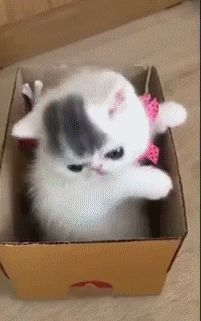 Small Kitten in a Box